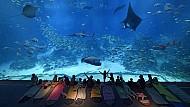 Aquarium - thủy cung lớn nhất Đông Nam Á tại Singapore