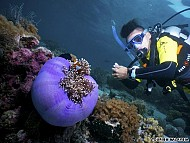 Đi du lịch Malaysia: Ngắm san hô ở Sipadan