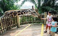 Kinh nghiệm du lịch Singapore với gia đình có con nhỏ 2019