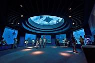 Lặn sâu xuống lòng thế giới đại dương SEA Aquarium ở Sentosa