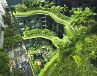 Người dân Singapore có xu hướng thích sống trên cao