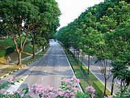 Singapore phủ xanh toàn bộ đất nước