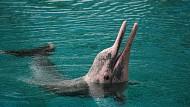 Trải nghiệm chương trình thế giới cá Heo ở Sentosa