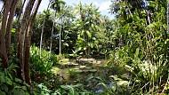 Vườn nhiệt đới Singapore được công nhận di sản thế giới