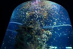 Thế giới đại dương màu nhiệm ở thủy cung lớn nhất châu Á