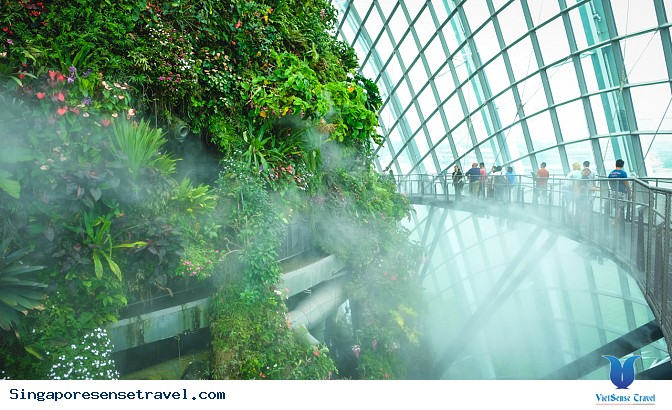"Cloud Forest ""Rừng mây"" ở Singapore - Ảnh 2"