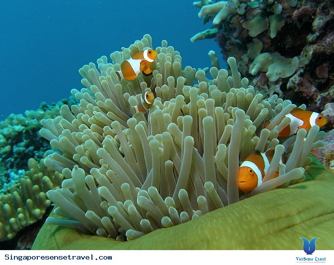 Đảo Rồng Tioman - Ảnh 3