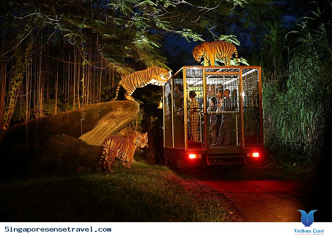 Night Safari - Ảnh 1