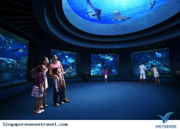 Công Viên Marine Life Park Ở Singapore